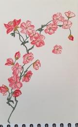 Cerisier Japonisant (5)